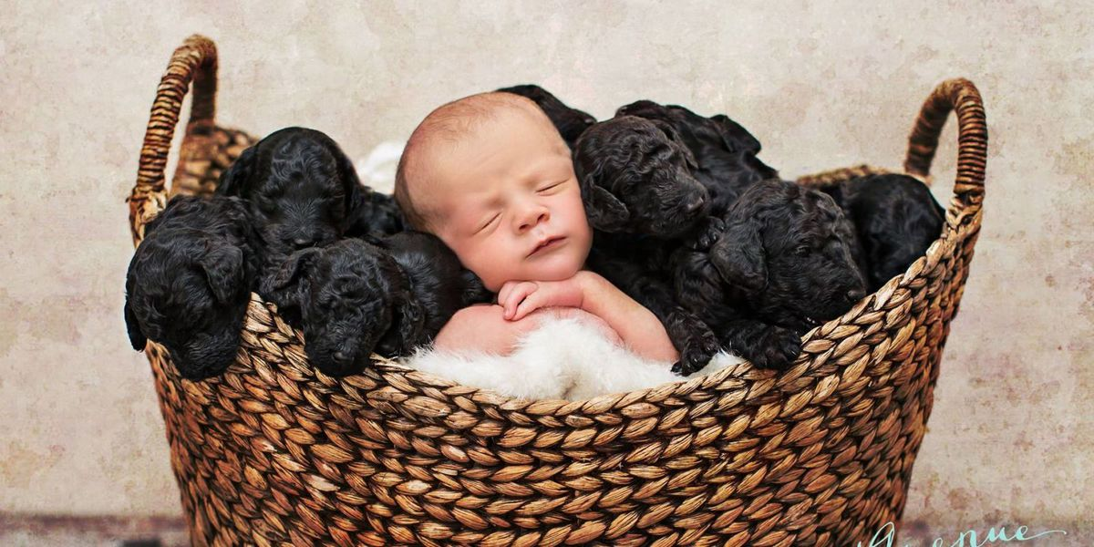 Prepare Your Dog for Your Newborn Baby with these 4 Tips