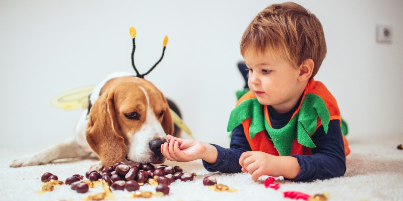 How to Help Kids Cope With the Losing a Pet?