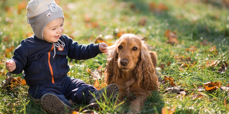 11 Amazing Pets That are Perfect for Your Kids